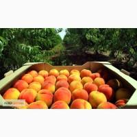 Ящики для персиков, абрикос, сливы, винограда, ...