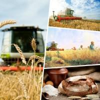 Услуги по уборке в Украине зерноуборочными и кормоуборочными комбайнами CLAAS