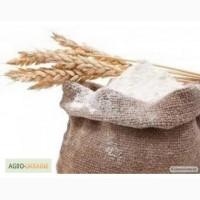 Мука пшеничная в мешках по 50кг