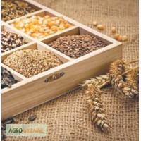 Продам пакетоване насіння овочів та квітів оптом