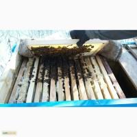 Продам Весной 2017г 40 пчелосемей Украинской степной