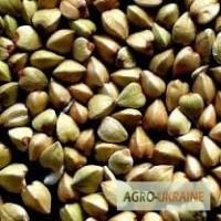 Продам насіння гречки, сорт Гранбі( Канада), Цена35, Харьковская обл