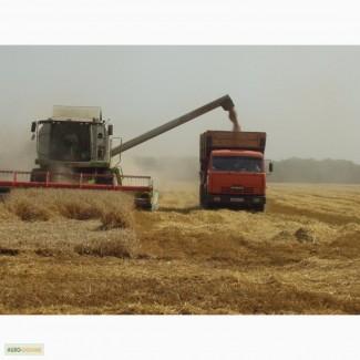 Куплю пшеницу на условиях СРТ или EXW