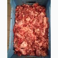 Головизна свинная