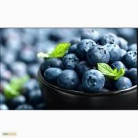 Купим лесные ягоды ( чернику, ежевику)