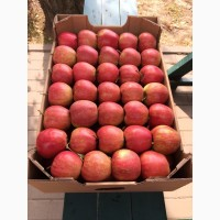 Продам яблоки сорта Джонагоред