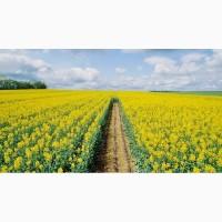 Предприятие производит закупки зерновых культур РАПС с гмо и без
