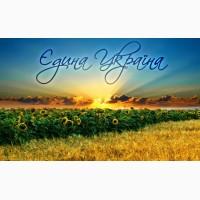 Пропонуємо придбати насіння соняшнику від виробника
