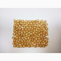 Продам нут семенной сорт Азкан (Турция)