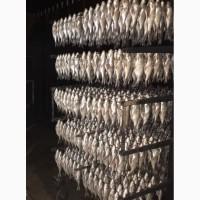 Риба Сушеная от производителя