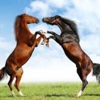 Куплю лошадей дорого