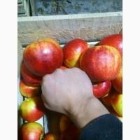 Продаємо якісні яблука