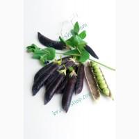 Горох Сизый нос, 15 семян