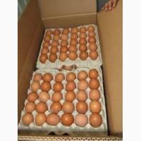 Продаем яйцо куриное, категория С1 (55-65gr) коричневое и белое отправка в любой город
