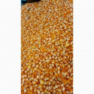 White and Yellow Corn