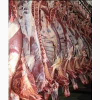 Продам оптом туши говядина, телятина, баранина и конина