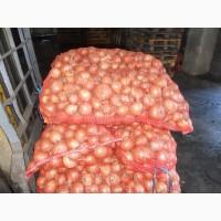 Продам товарный лук оптом от 10т