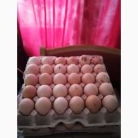 Куплю оптом яйцо куриное фермерское кремовое