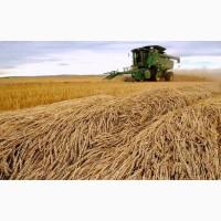 Купим пшеницу продовольственную и фуражную.Возможен самовывоз