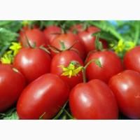 Купим помидор