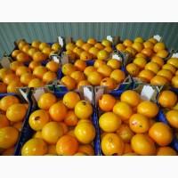 Апельсин 1 сорт