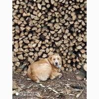 Колотые дрова твёрдые породы (дуб, ясень, акация)