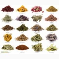 Лекарственные травы (Лікарські рослини)