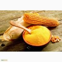Мука кукурузная на экспорт