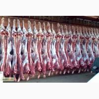 Мясо говядина бычек телка с доставкой на магазин