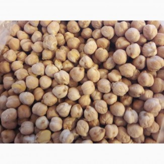 Продаем семена нута сорт Иордан