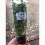 Продам зелень в горшочках