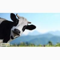 Гранула для дойных коров - Енергетическо Протеиновая добавка