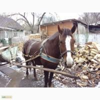 Продається молодий кінь
