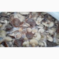 Продам Грибы. МАСЛЯТА гриб солено-отварной