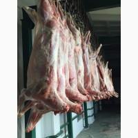 Продам мясо БАРАНИНА (ягнятина) Халяль