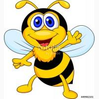 Покупаю мед в Запорожской обл