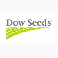 Купить семена кукурузы ДС 0479 Б