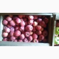 Яблуко 6 сортів коло умані