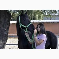 Продам отличную верховую лошадь
