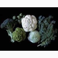Продам товарную капусту Броколли Фиеста F 1, Венера F 1