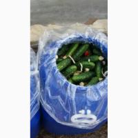 Продам солені огірки