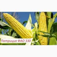 Семена кукурузы Патриция - ФАО 330, гибрид F1, (Семанс Франция)
