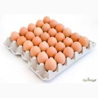 Продам яйцо куриное столовое, отборное, С-1, коричневое и белое мелким оптом от 5 ящиков