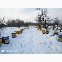 Продам семьи пчел 50 шт., порода бакфаст/карника, Дадан. Можно с ульями 10р