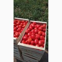 Продам помидор Сливку номерную