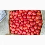 Продам помидор оптом 100тонн