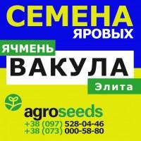 Семена ярового ячменя, сорт Вакула (элита) 2019 от Agroseeds / Агротрейд