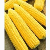 Покупаем Кукурузу Оптом