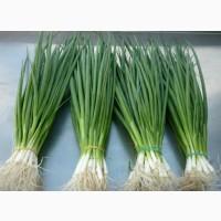 Реализуем зелёный лук