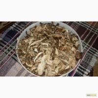 Карпатские Белые сушенные грибы 2016 г